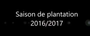 Dronement bonne saison pour les Planteurs !