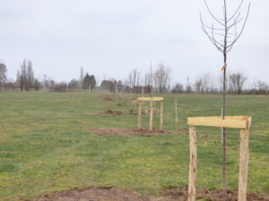 Agro-foresterie – Villers au Tertre