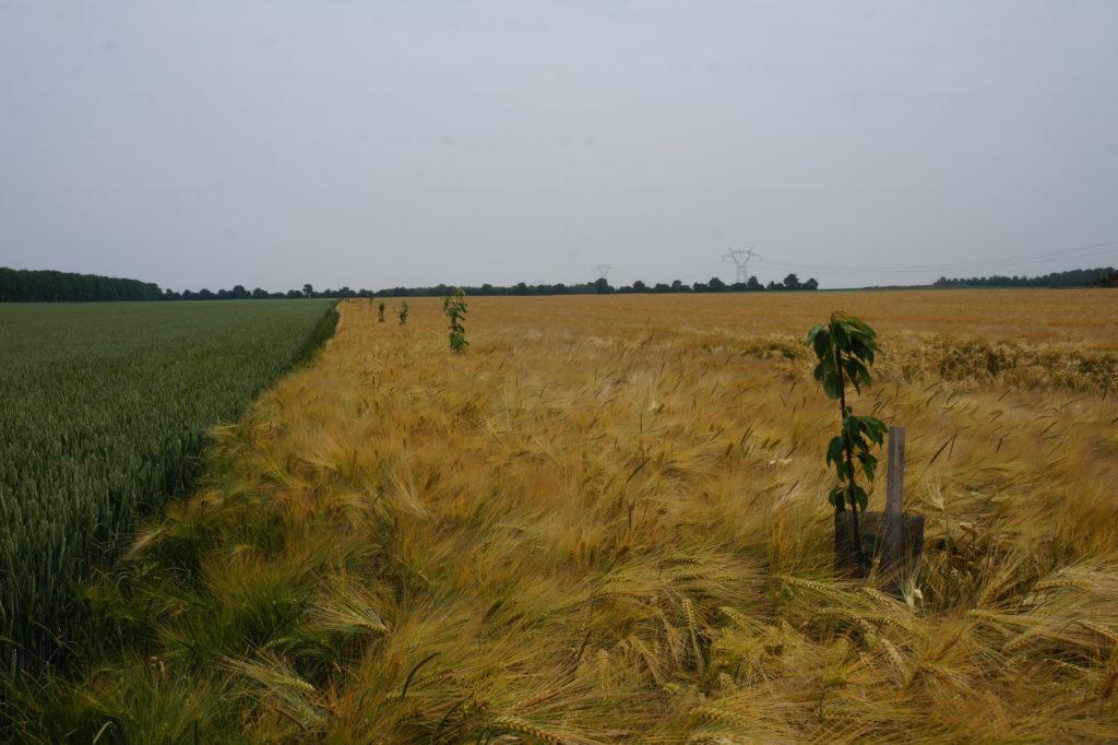 Transition écologique: contre la déforestation!