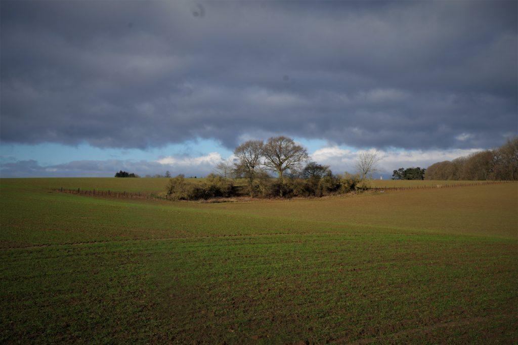 Les arbres au service de l'agriculture – L'agroforesterie