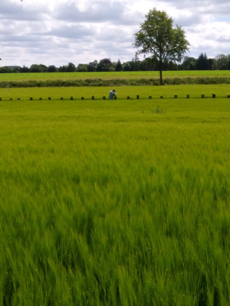 Retour sur le projet expérimental d'agroforesterie