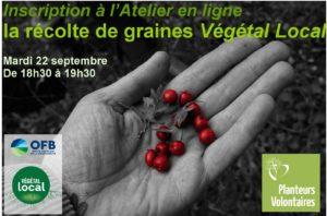 Webinaire – Végétal Local –  la récolte de graines